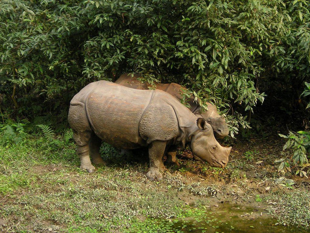 rhino-382
